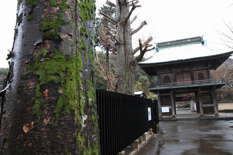 武蔵国分寺3