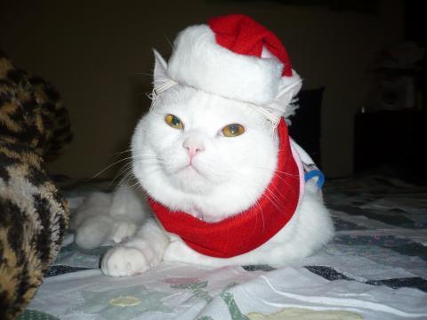 メリクリスマス マリー