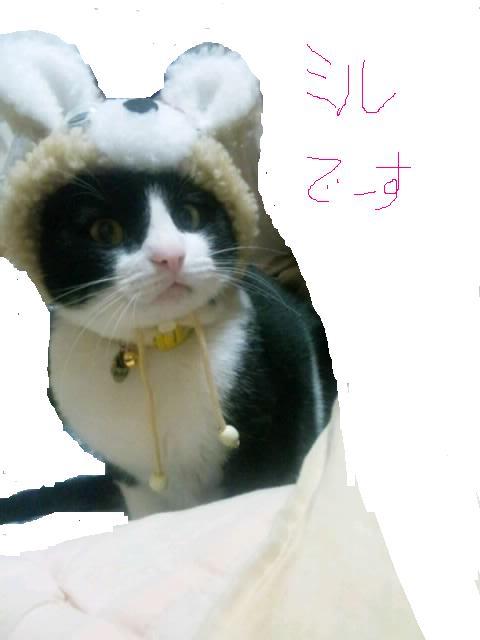 くまニャン帽子を被ったミル