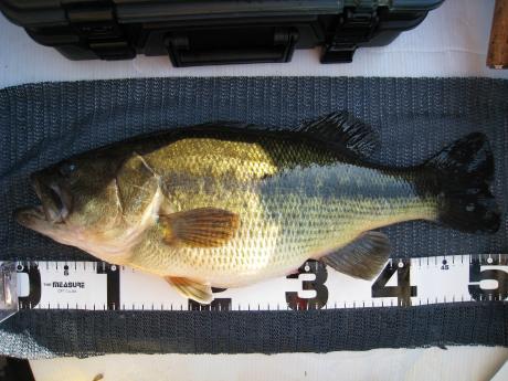 2010425日52cm