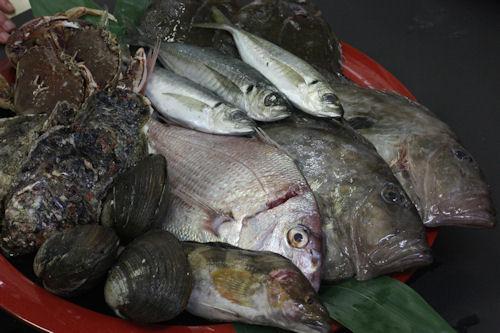 大洗の地魚