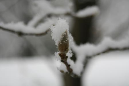 110209雪景色 (4)95