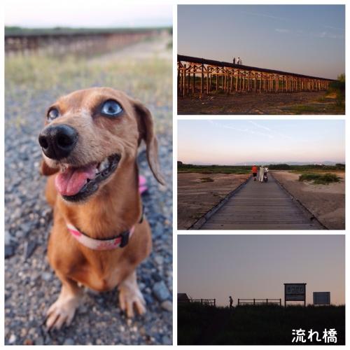 2013・8・12 流れ橋