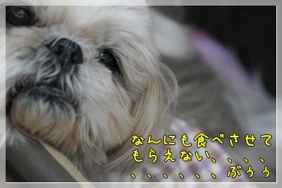 2011_0515_133157AA.jpg