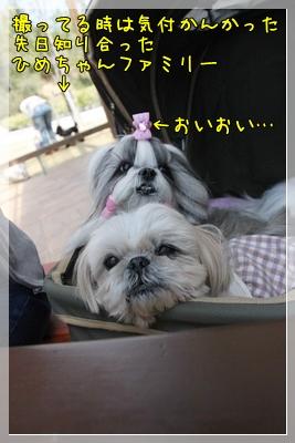2011_0515_133212AA.jpg