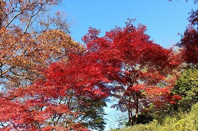 2013-11-23 織姫山の紅葉とネコ 007