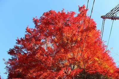 2013-11-23 織姫山の紅葉とネコ 006