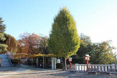 2013-11-23 織姫山の紅葉とネコ 018