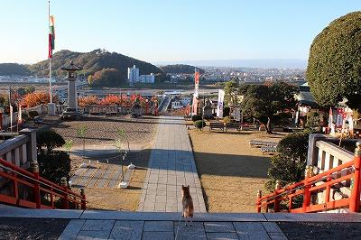 2013-11-23 織姫山の紅葉とネコ 017