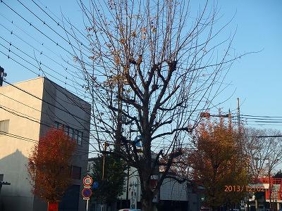 2013-12-02 街路樹 010