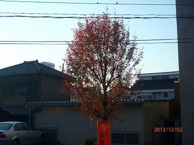 2013-12-02 街路樹 008