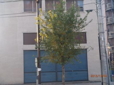 2013-12-02 街路樹 007