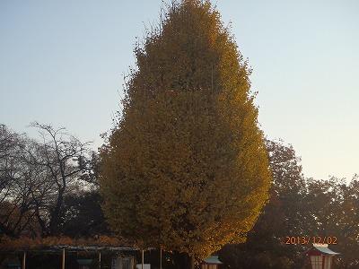 2013-12-02 街路樹 003