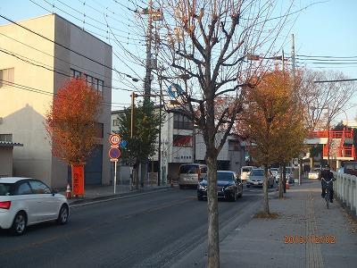 2013-12-02 街路樹 011