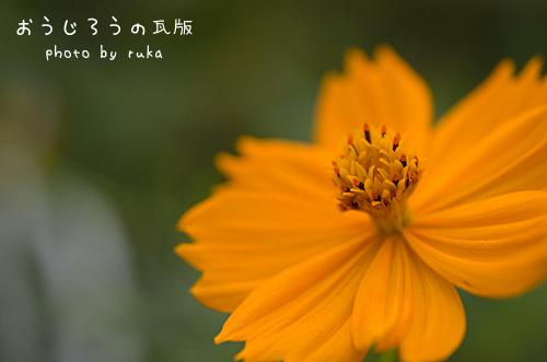 *6-DSC_0729