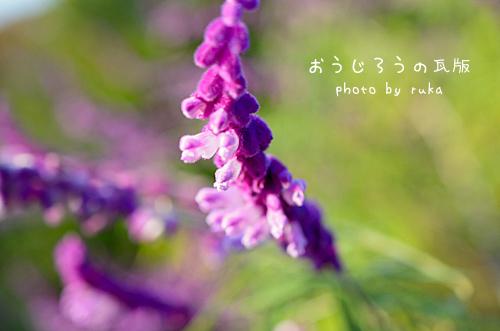 *13-DSC_1895