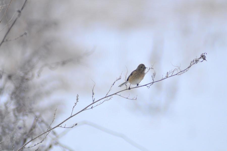 長沼小鳥12.28 225-2trs