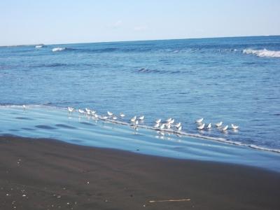 九十九里の浜