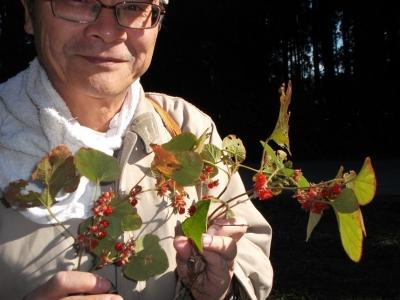 茂原の冬苺