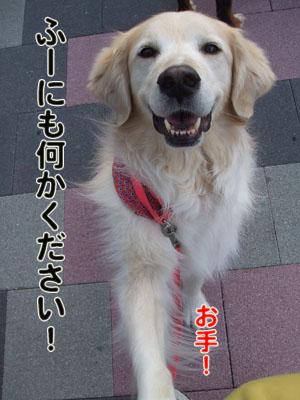 2010_05300032.jpg