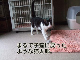 2010_06010037.jpg