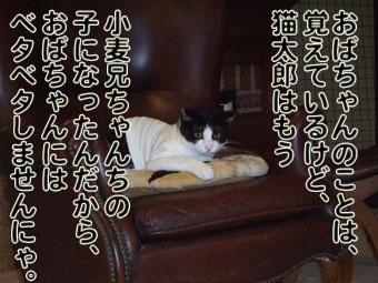 2010_06010073.jpg