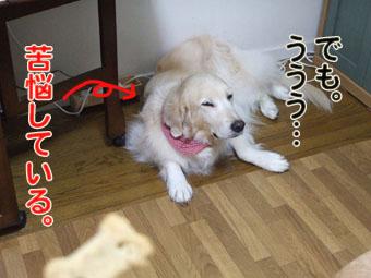 2010_06050038.jpg