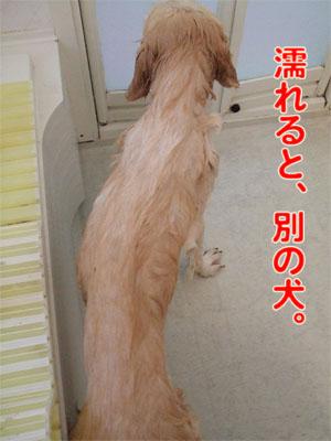 2010_06050045.jpg