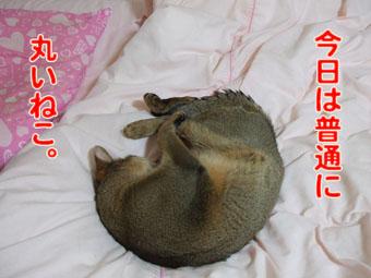 2010_06070024.jpg