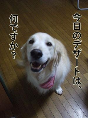 2010_06100018.jpg