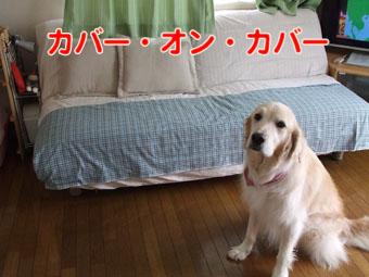 2010_06130026.jpg