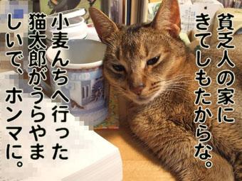 2010_06150008.jpg