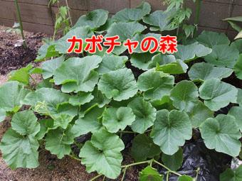 2010_06150023.jpg