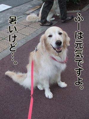 2010_06150044.jpg