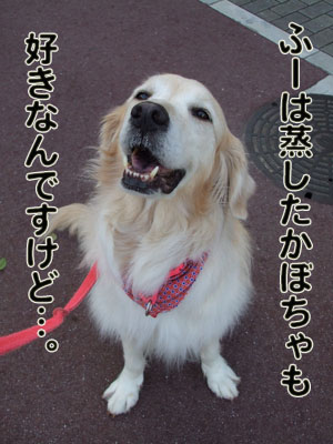 2010_06150049.jpg