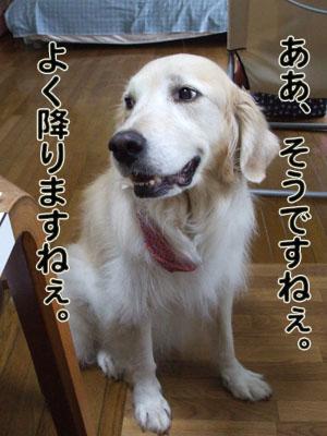 2010_06250050.jpg