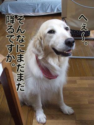 2010_06250053.jpg