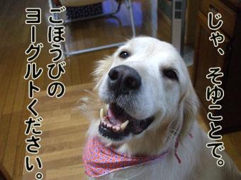 2010_06280032.jpg