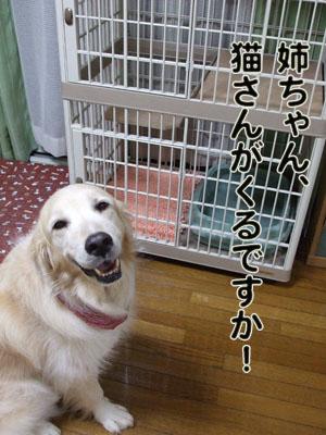 2010_07040047.jpg