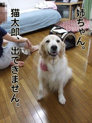 2010_07060021.jpg