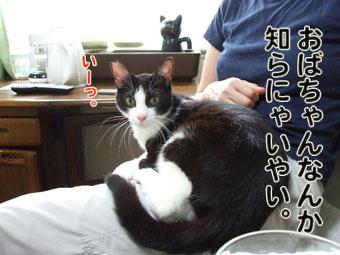 2010_07060060.jpg