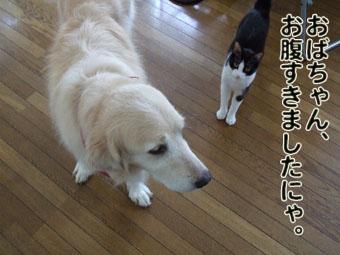 2010_07060072.jpg