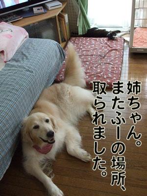 2010_07060094.jpg