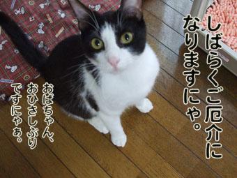 2010_07070053.jpg