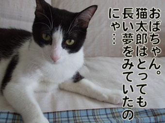 2010_07070096.jpg