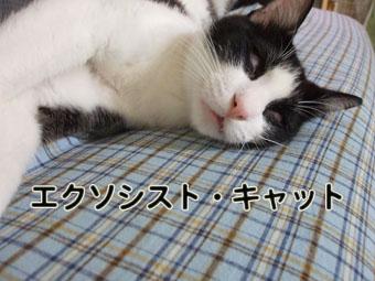 2010_07080043.jpg