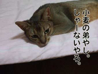 2010_07130016.jpg