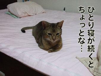 2010_07150004.jpg