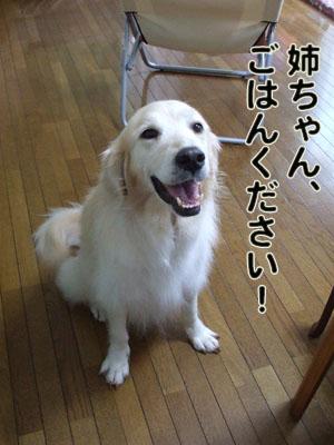 2010_07150021.jpg