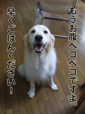 2010_07150022.jpg